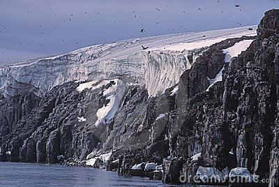 Glacier, bird cliffs and murres