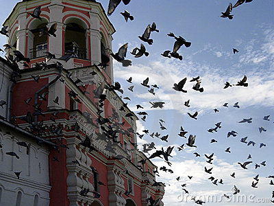 Birds at Danilov Monastery