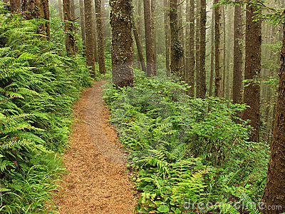 Fern Lined Path