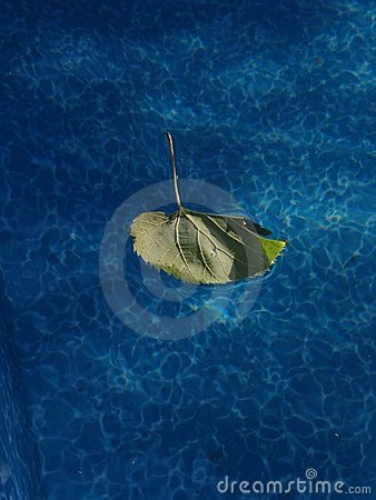 Leaf in a Pool