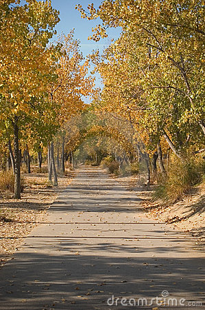 Paved pathway in Autumn