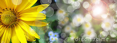 Summer banner with yellow daisy