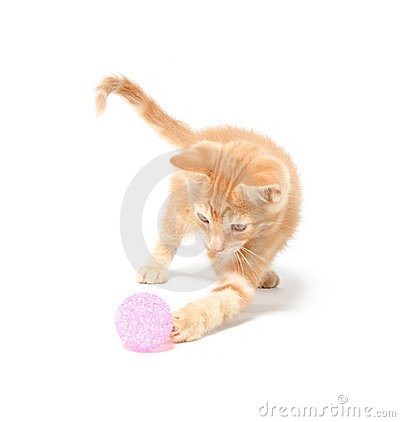 Cute yellow kitten playing with ball