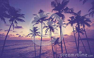 Coconut palm trees silhouettes on a tropical beach at sunset, color toned picture, Sri Lanka