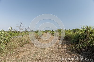 Cluttered, overgrown grass on road into nowhere with copy space on the emply sky, remote place