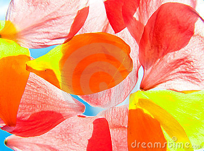 Orange and yellow flower petals