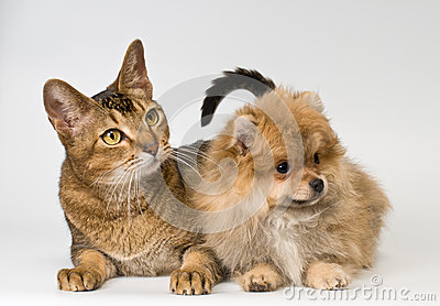 Cat and puppy  in studio