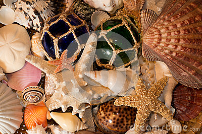 Cluster of Seashells