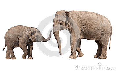 Little elephant calf with his mother