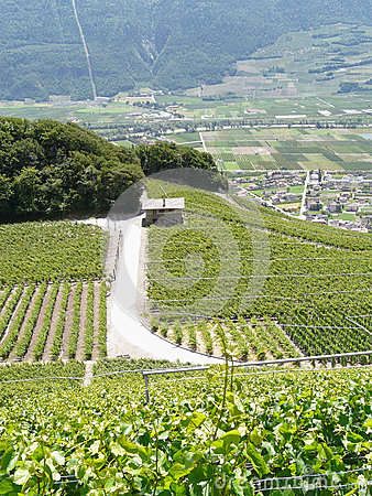 Lonely house in the vineyards of saillon