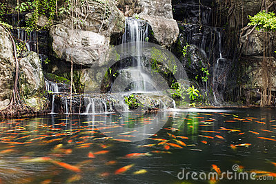 Koi fish in pond at garden with a waterfall