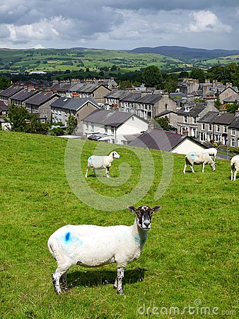 England: stone terrace houses with sheep