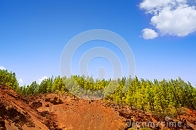 Corona Forestal in Teide National Park at Tenerife