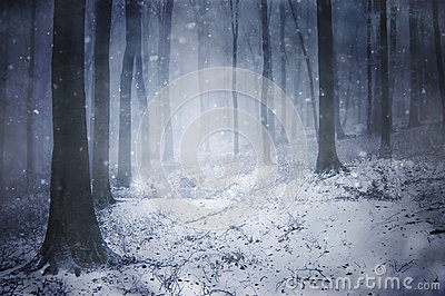 Snow in a frozen dark forest with snowflakes