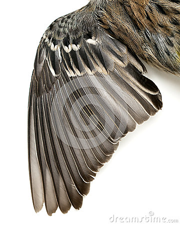 Bird Wing Feathers