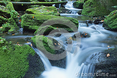 Peaceful flowing stream in the forest