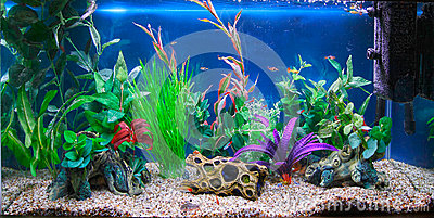 Tropical fish tank aquarium