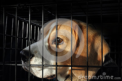 Animal Testing - Scared Dog in Cage