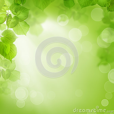 Background of green leaves, summer or spring