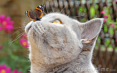 Butterfly lands on nose of cat