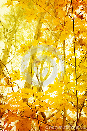 Orange and yellow leafes