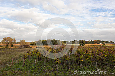 Landscape in Bordeaux in autumn