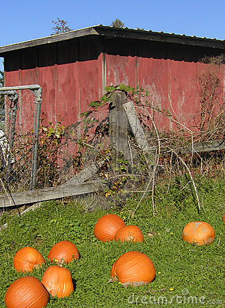 Old Shed and Pumpkins