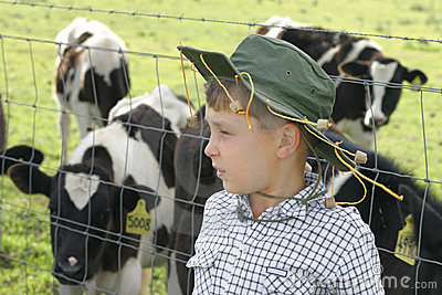 Young farmer amongst dairy cows