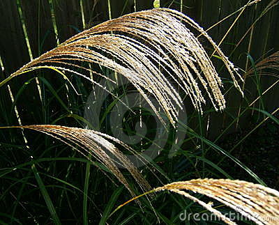 Tall Grass Seed Heads