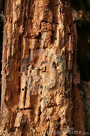 Rotted wood texture