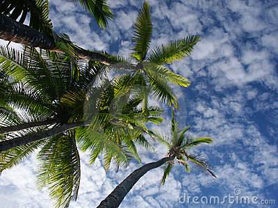 Palmtrees and sky