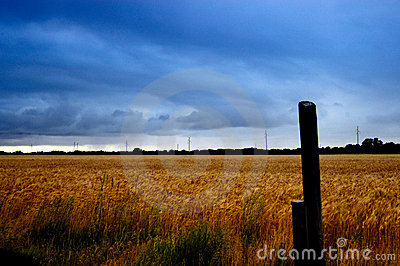 Stormy Wheat Field