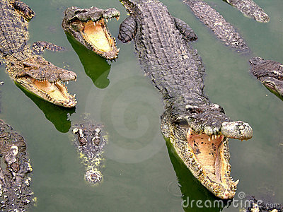 Samutprakan Crocodile Farm and Zoo