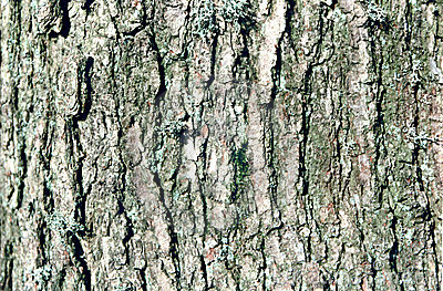 Tree close up