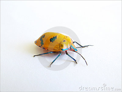 Colour Bug 2