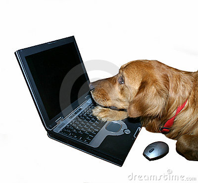 Golden retriever computes