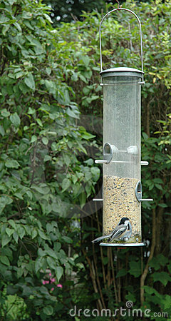 Chickadee at the Bird Feeder