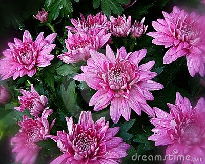 Pink Fall Flowers (1)