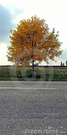 Autumn on the highway