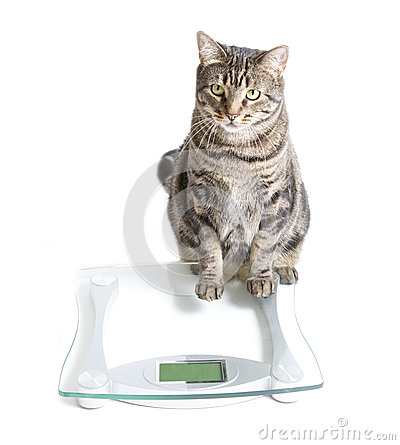 Cat and scale