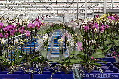 Nursery of orchids overview