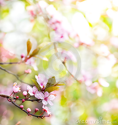 Abstract floral spring tree background