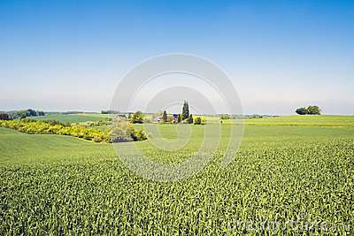 Agrarian landscape with farm