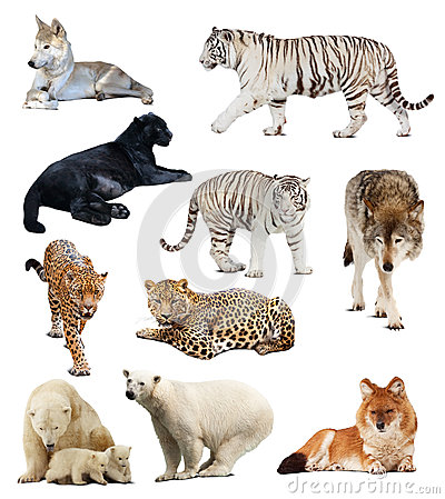 Set of images of carnivores