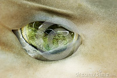 Green Eye Shark