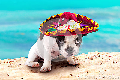 Puppy in Mexican sombrero on the beach