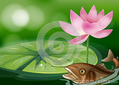 A pond with a fish, a waterlily and a flower