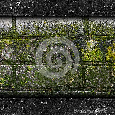 Moss old green wall stone pattern mold texture