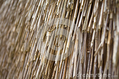 Texture. straw roof