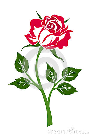 Red rose with stem.